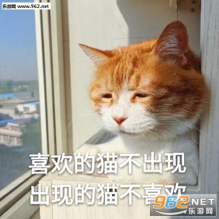 日常吸猫表情枕膝表情包图片