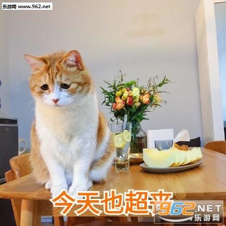 今天也超衰橘猫搞笑图片日常吸猫表情包下载乐游网图片