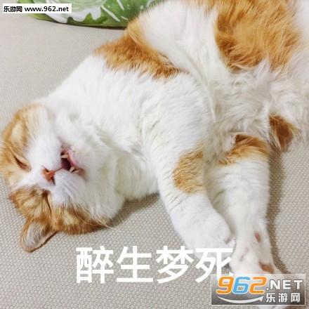今天也超衰橘猫搞笑图片|日常吸猫表情下载咧嘴1熊猫表情包人笑图片