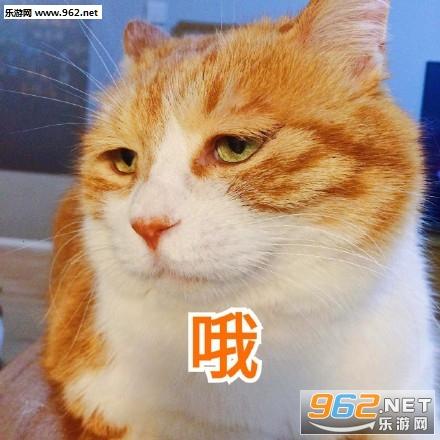 今天也超衰橘猫搞笑图片|日常吸猫头像下载大全女生包a头像表情表情图片
