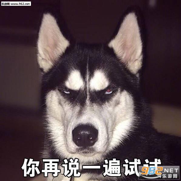 其他 菜狗汪星人表情包 《菜狗汪星人表情包》是一款以狗狗为素材的