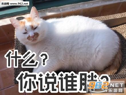 妈我饿了楼楼表情图片表情|我jio得阔以猫爪带陈亦讯字我爱你猫咪包图片