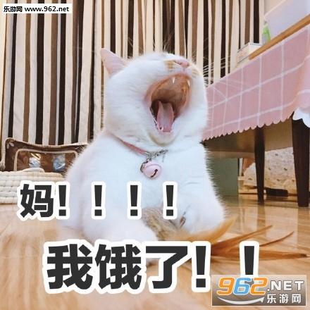 我jio得阔以猫爪表情卡人物包漫图片表情图片