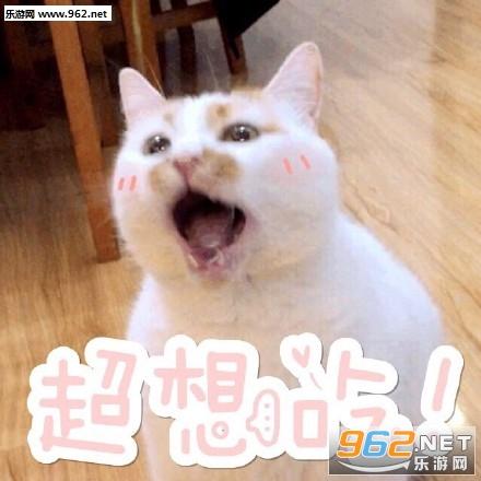 《我jio得阔以猫爪表情包》是一款主要以猫咪楼楼为素材制作的表情包