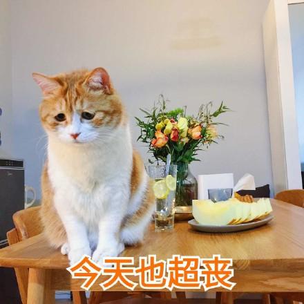 今天也超衰橘猫搞笑图片|日常吸猫表情下载猫的超凶表情包图片