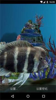 3D水族馆热带鱼动态屏保(可喂鱼)截图0