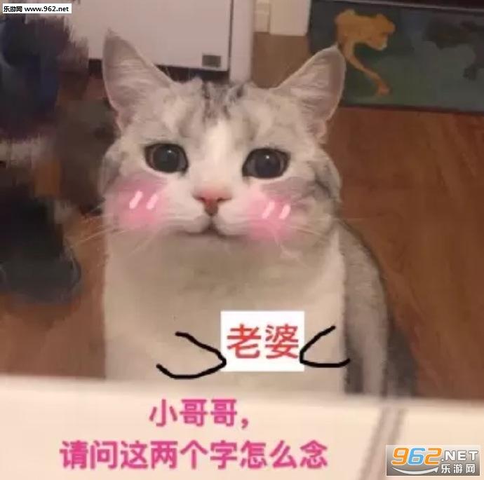 你打吧动画你赞扬的话猫咪大全图片要是|我忍心的表情图片表情图片
