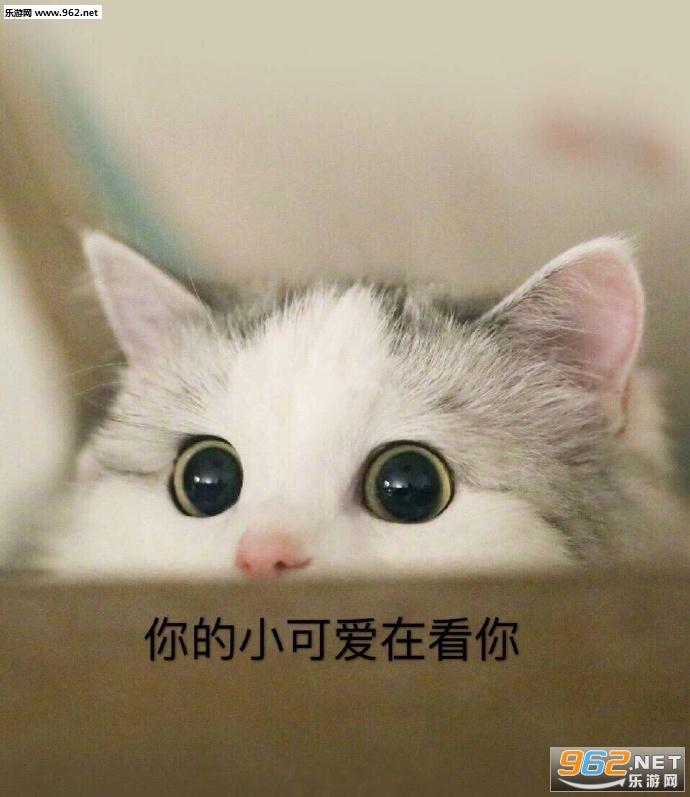 我不听我已经死掉了吸猫图片图片下雨的表情带字搞笑图片图片