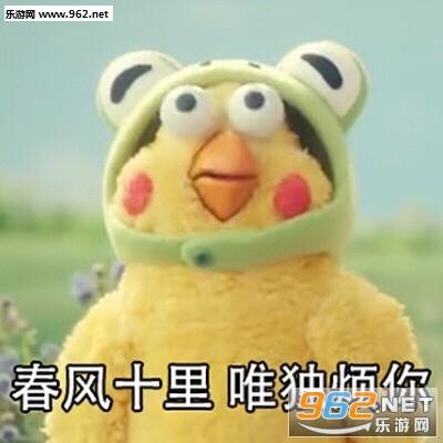 表情十里吹不动你春风兄弟鹦鹉别养蛙了养我表情包图片