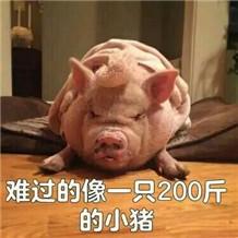 难过的像一只200斤的猪表情无表情语动包态图片