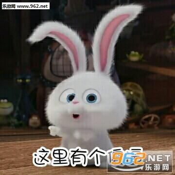 略略略略略来打我啊表情小白大人大全|全部表情图片a表情兔子的图片包图片