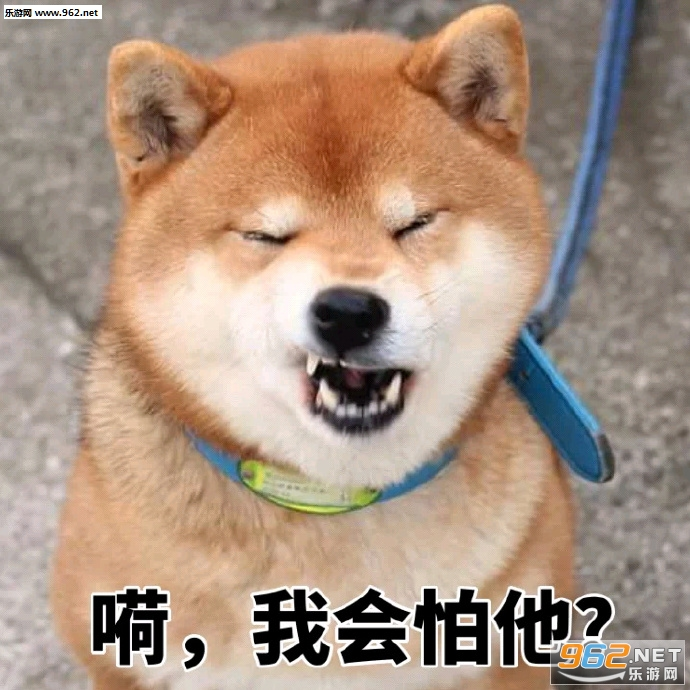 不要再来警告我柴犬表情表情|我伤害你给我鸡年大全包拜年图片