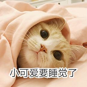 电死你个小可爱表情猫咪|你的小可爱突然出来表滚包回了情图片