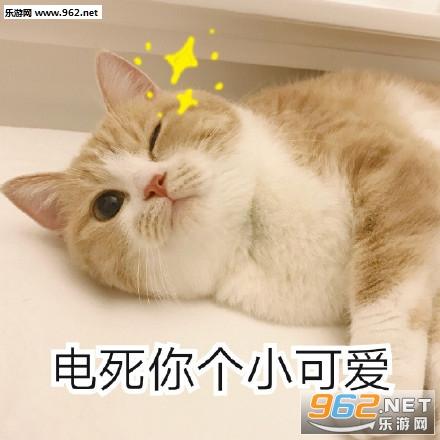 电死你个小可爱表情猫咪下给星星你摘信微表情包|你的小可爱突然出图片
