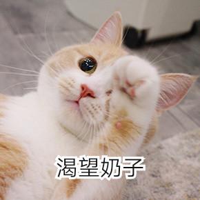 电死你个小可爱表情猫咪搞笑图片的丑女|你的小可爱突然出图片
