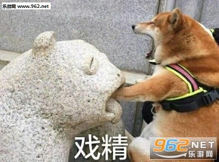 霸道狗裁壁咚你表情好笑图片表情包大全微动态信图片