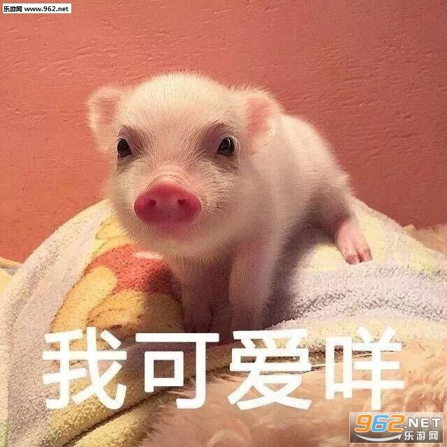 你是不是外面有别的猪了表情喝酒表情包搞笑图片的图片