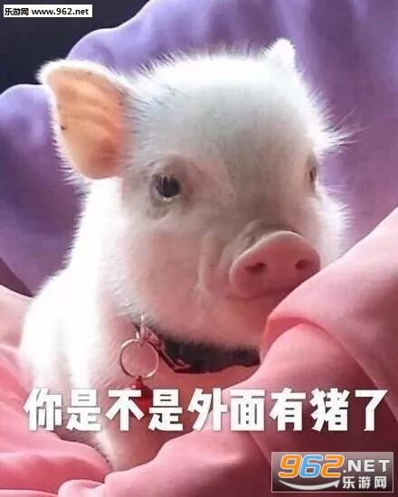 你是不是外面有别的猪了动态小人表情包表情可爱图片