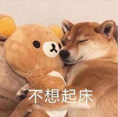 狗生无可恋表情包图片图片