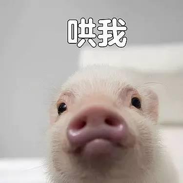 你是不是外面有别的猪了表情贱小颜的各种图片表情图片