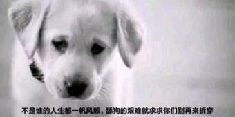 舔狗是什么梗?