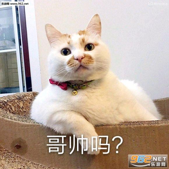 胖小猫可爱卖萌照片