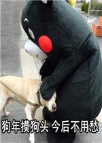 狗年摸表情凡事狗头愁表情不用吵图片包图片