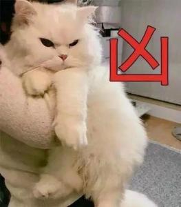 猫咪撩人表情包图片