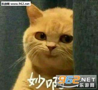 猫咪撩人猫咪表情杀表情包歪头