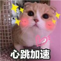 微信敲可爱的表情猫咪表情性猪色魔包小方黑白