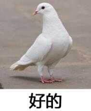 表情动态我一定来表情包鸽子啊你出来图片
