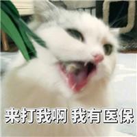 超萌表情猫咪亚索表情包提莫打图片