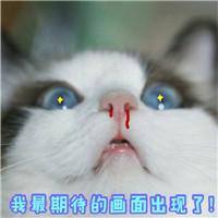 超萌图片表情微信中的各种猫咪表情尺寸图片