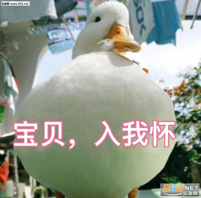 生气1地走了鸭鸭表情搞笑跳水表情包图片