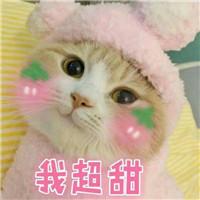 微信敲可爱的猫咪表情包图片
