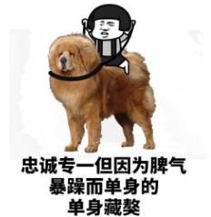 解密单身狗为什么成为单身狗表情包
