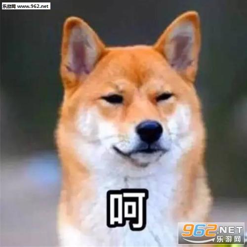 狗狗表情包动图系列图片