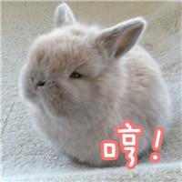 超萌小表情带字兔子动表情愉快包v表情图