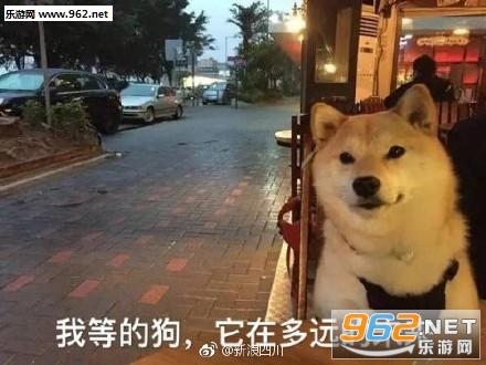 五一图片狗表情委屈了微信单身表情图片