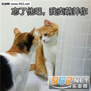 微信猫咪卖萌表情包图片