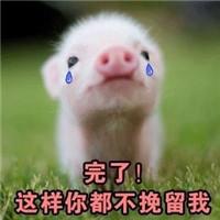 你是不是有别的狗了_你是不是在外面有别的猪了表情包