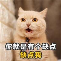 土味猫咪情话带字表情动态表情包qq馆长金图片