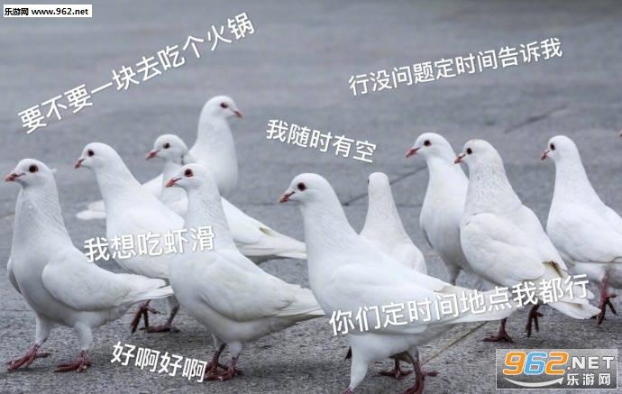 我忙完这点就来放表情表情你听见了吗鸽子包图片