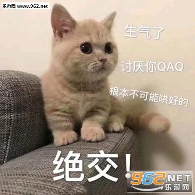 不可绝交了讨厌你线条生气哄好的小猫图片表情根本emoji表情动物图片