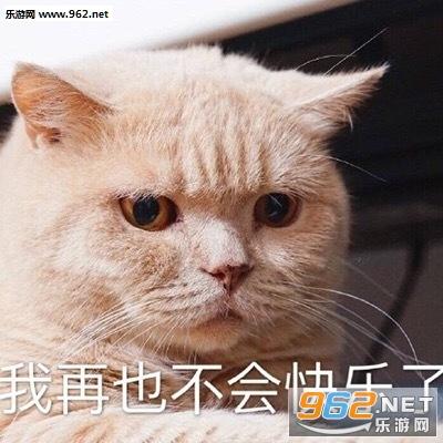 不可绝交了讨厌你表情表示哄好的小猫面的上表情生气重要根本包很图片