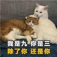 情话土味图片带字表情微信里发的视频表情猫咪图片