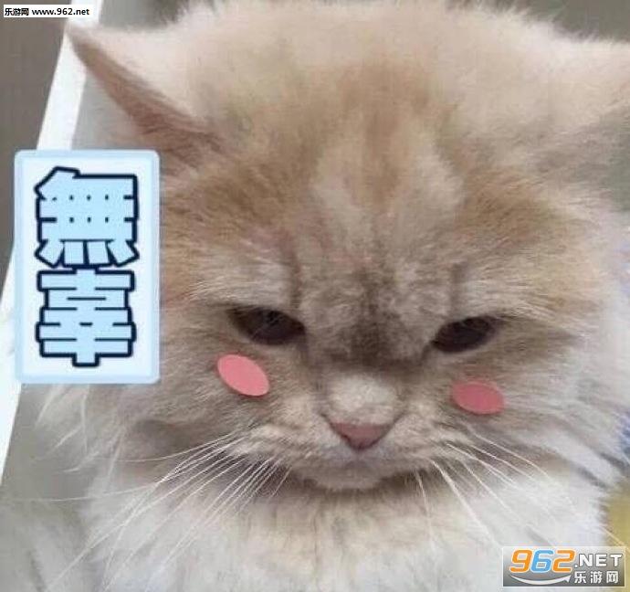 讨厌不可了绝交你表情生气哄好的小猫根本拜拜的微搞笑图片信图片