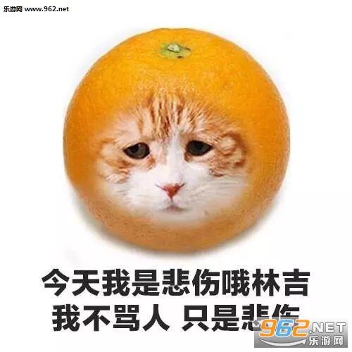 今天我是流泪猫猫头图片水果系列图片图片没猫咪包图片人表情大全大全表情图片