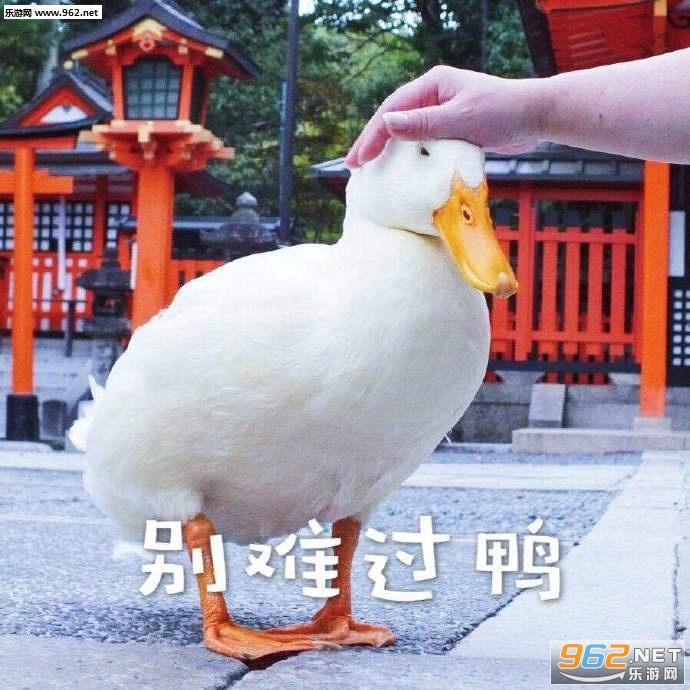 来难过鸭喜欢你鸭别快活鸭表情表情包动态元拥抱二次图片