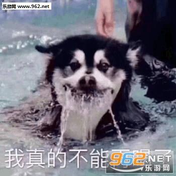洒家来取你狗命狗子表情包图片
